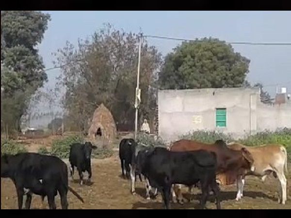 Villagers surrounded the animals and made mortgages in stockyard of Hapur MLA
