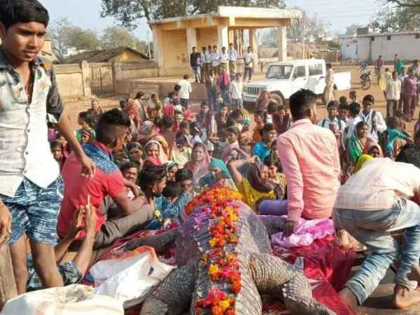 Cried whole village on death of 175 year old crocodile in Raipur