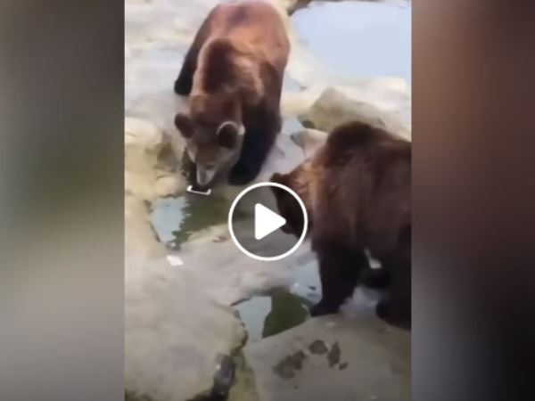 man accidently threw iphone while feeding bear in zoo