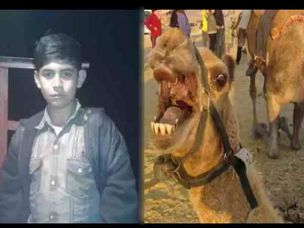 boy died after camel attacked him in parbhani in maharashtra