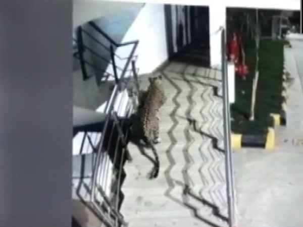 A leopard has been spotted at the basement of a hotel in Thane