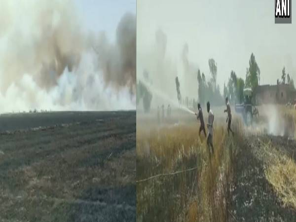 Punjab: A fire destroyed 1500 acres and 200 acres of standing wheat crop,in Jalandhar and Moga