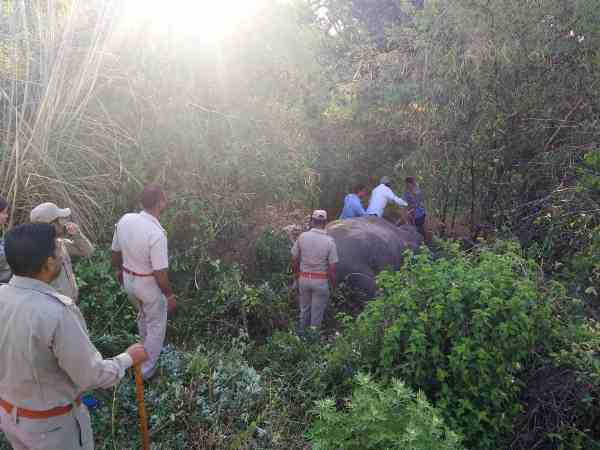 two elephant died in train accident