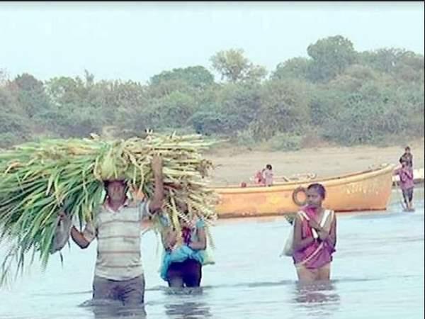 नर्मदा से पानी नहीं, गुजरात में नमक मिल रहा; समुद्री जल ने इस तरह बहाव क्षेत्रों में फ्लोराइड बढ़ाया