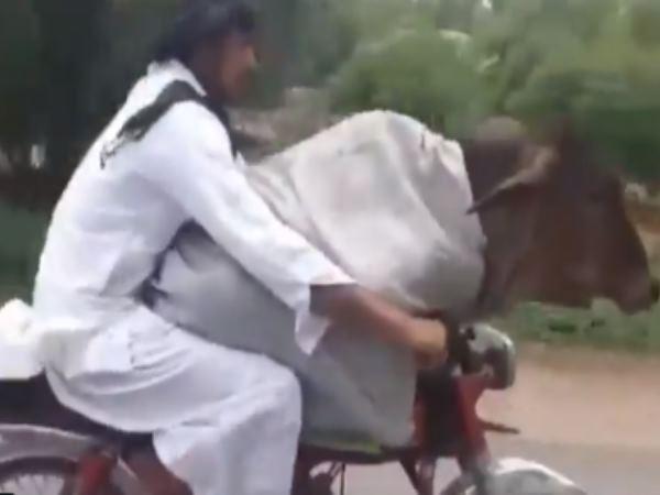बाइक पर गाय को बैठाकर चल दिया शख्स, वायरल हुआ वीडियो तो लोटपोट हुए लोग