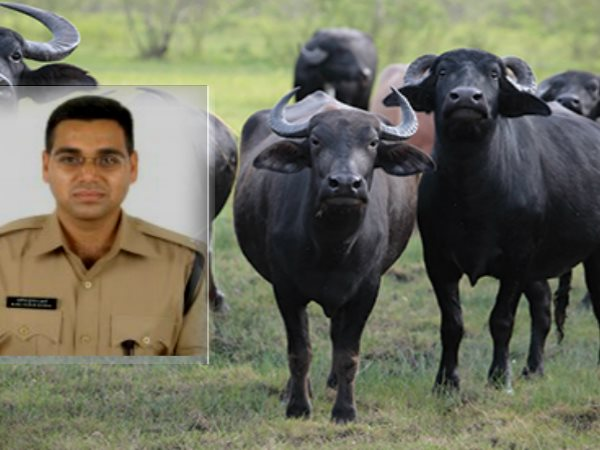 IPS Manoj Sharma success Story Morena to mumbai deputy commissioner