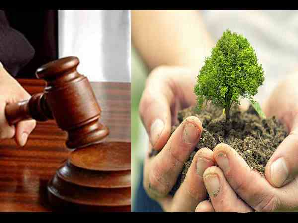 Plant 20 fruitful trees and take care of them, peculiar punishment by HC