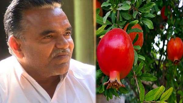 अनार की खेती से 90 लाख कमा रहा ये दिव्यांग, दूर-दूर के लोग सीख रहे इनसे, पद्मश्री समेत ढेरों पुरस्कार जीते