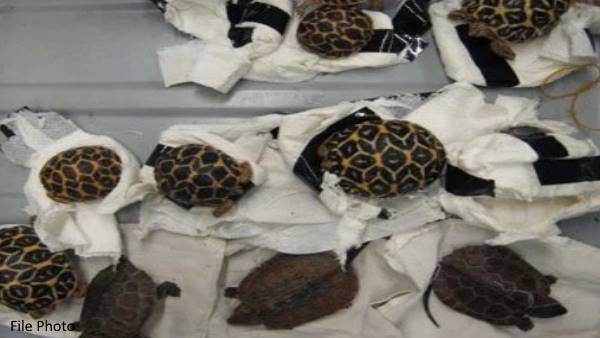 four Indians arrested and seized drugs and turtles in Malaysia
