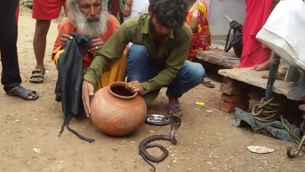 Two Member of a Family Died due to Snake Biting in Hindaun City Karauli