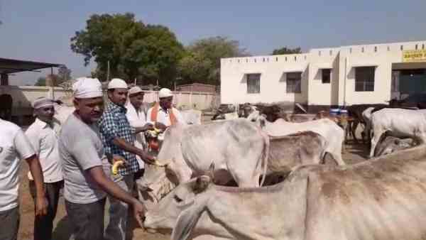 muslim brothers reached gaushala to feed cows