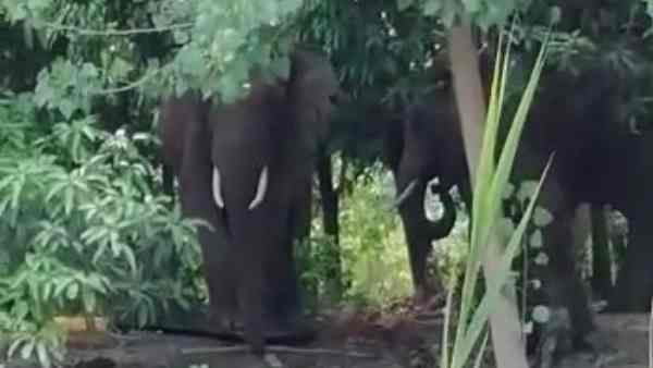 forest guard killed by elephants
