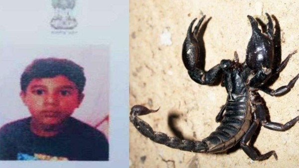 boy studying at government school in Uttar Pradeshs Jhansi died after getting stung by scorpion