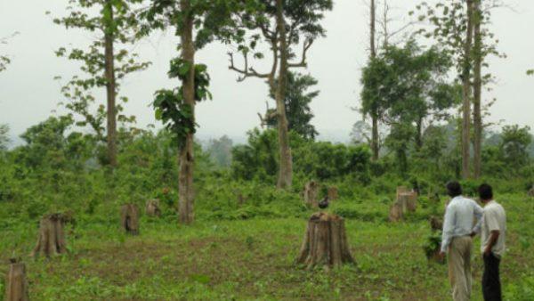 हीरों के खनन के लिए काटे जा रहे जंगल