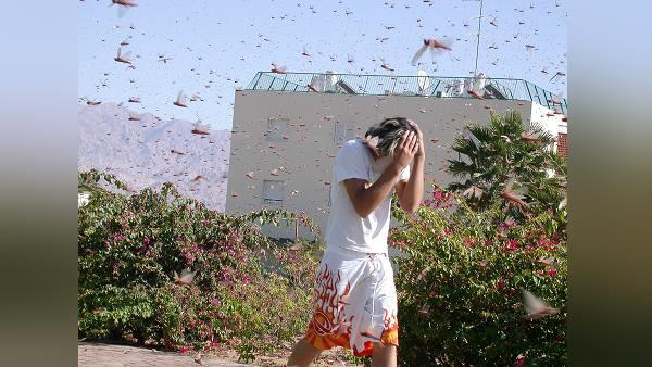 यह भी पढ़ें: पाकिस्तान की तरफ से गुजरात पर हो गया है Locust अटैक, 26 साल बाद किसानों को दिखाई दिए 'घुसपैठिया'