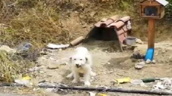 oyal dog refuses to leave spot where his owner killed in car crash 18 months ago in Greece