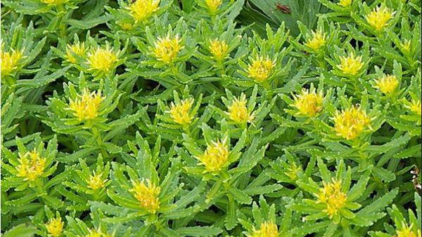 <strong>पढ़ें-लद्दाख का वो पौधा,जिसे PM मोदी ने बताया संजीवनी</strong>