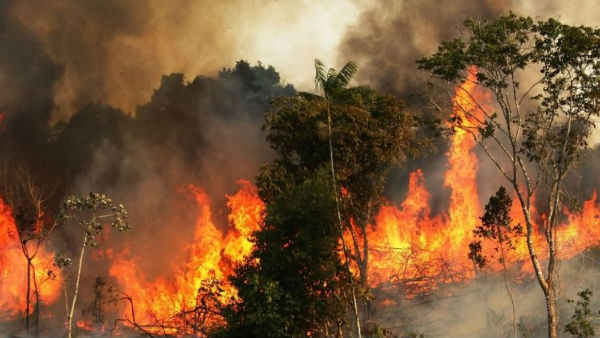 What is The Reason Behind Amazon Rainforest Fire?