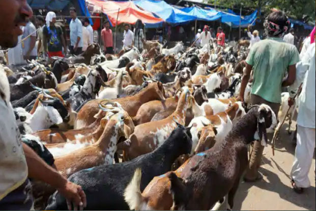 Bombay HC has banned slaughter of animals in private flats & Housing societies. Over 7,000 permits were issued for Bakrid Sacrifice by BMC