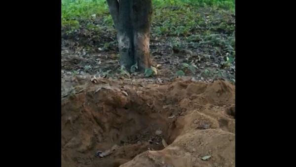 <strong>ये भी पढ़ें: कब्रिस्तान में घास काटने आया था शख्स, दिखा ऐसा नजारा कि पैरों तले खिसक गई जमीन</strong>