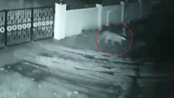 Viral video: Leopard enters house in Karnataka, takes away owners pet dog