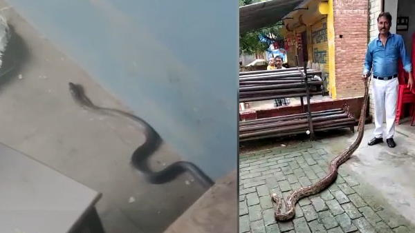 black cobra found in classroom of degree college