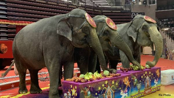 Denmark govt bought four elephants from circus companies, so that they retire