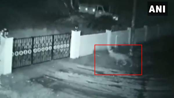 A leopard entered a house and took away the owners dog in Thirthahalli of Shivamogga