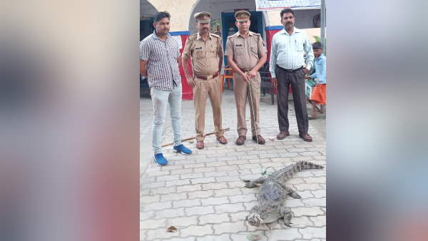 Police caught crocodile and brought to thana