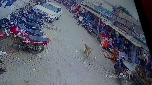 सीकर: मुख्य बाजार में घुसे पैंथर को देख दुकानें हुईं बंद, ग्राहकों ने भी भागकर बचाई जान