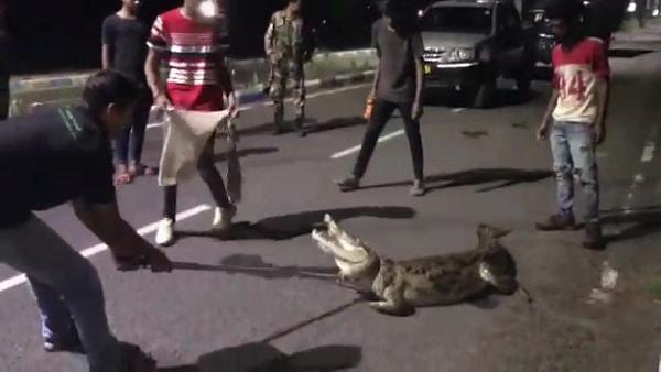 विशालकाय मगरमच्छ देख लोगों की बंध गई घिग्घी, 2 घंटे लगे काबू करने में, गुजरात से वीडियो वायरल