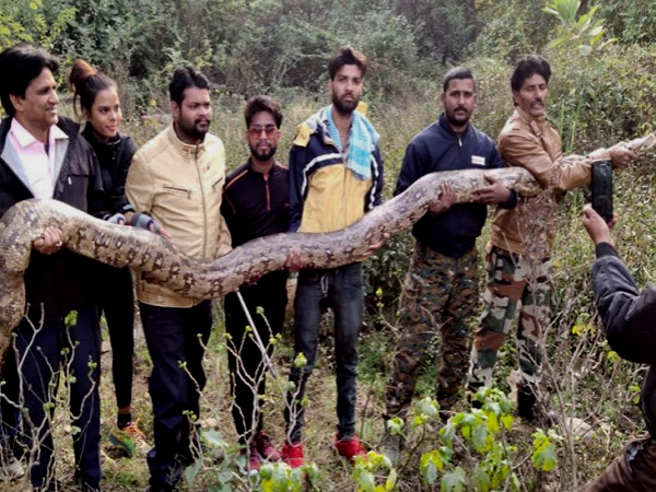 Watch : 14 feet long python rescued in kota - rajasthan, Video goes to viral