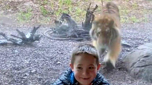 VIDEO देख उड़ जाएंगे होश- मजे से फोटो खिंचवा रहा था 7 साल का बच्चा, बाघ ने पीछे से किया हमला
