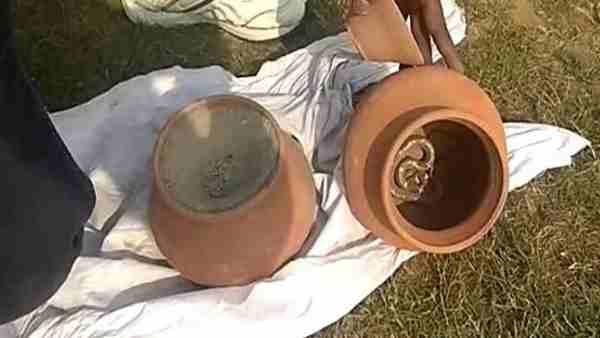 नागिन की मौत के गम में दो दिन बाद नाग ने भी तोड़ा दम, जानिए पूरा मामला
