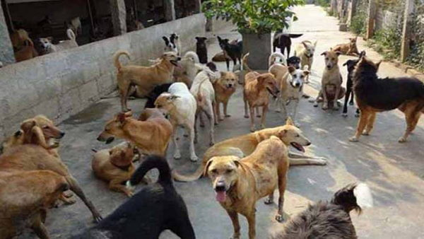 Number of the dogs increasing continuously at Ahmedabad, Congress MLA ask for answer from Govt