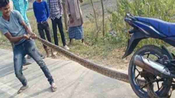 Python tangles to the wheel of a bike in Kushinagar