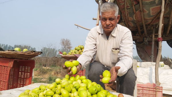Farmer earning lakhs with farming of berry