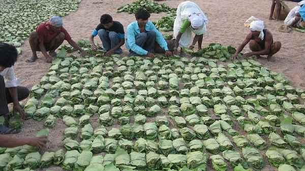 Forest dwellers will earn Rs 2,500 crore by collecting small forest produce in Chhattisgarh