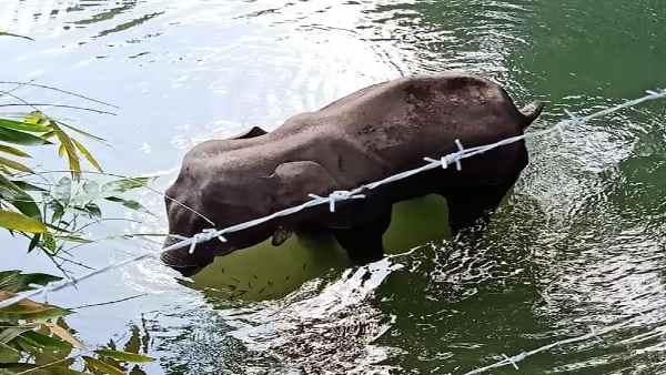 इसे भी पढ़ें- Kerala:हाथियों के साथ क्यों हो रही है क्रूरता, महीनेभर में दो-दो हथिनी की दर्दनाक हत्या