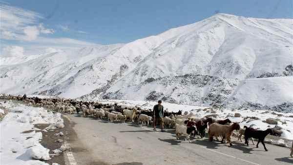लद्दाख में चीन से LAC को बचाने के लिए खानाबदोशों की रक्षा है बेहद जरूरी, जानिए क्यों