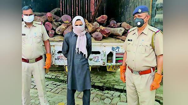 हरियाणा में 20 क्विंटल चंदन की लकड़ियों से भरा कैंटर पकड़ा, कहां से कहां पहुंचा रहे थे तस्कर?