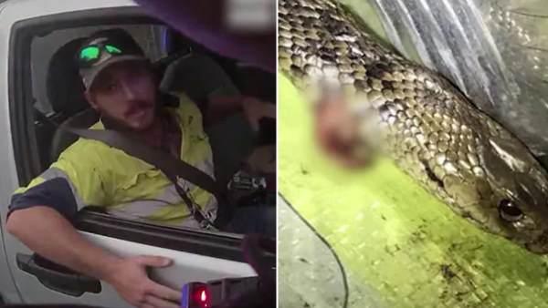 हाईवे पर तेज रफ्तार गाड़ी में जहरीले सांप और आदमी के बीच हुई लड़ाई, पैर पर लिपटा और फिर... Video वायरल