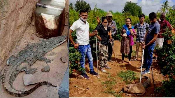 गुजरात: कई फीट तक पानी भरा तो जीव-जंतु इंसानी बस्तियों में घुसने लगे, घरों तक पहुंच गए मगरमच्छ