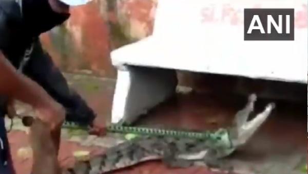 Video: वडोदरा की गलियों में घूमता मिला 5 फीट लंबा मगरमच्छ, रेस्क्यू करने में लोगों को छूटे पसीने