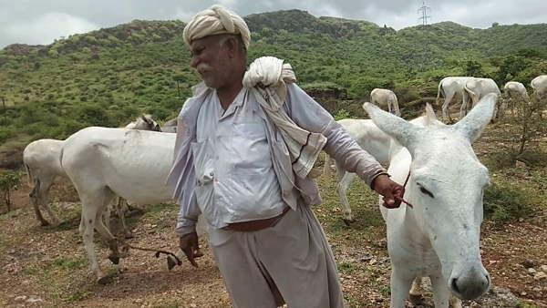 गुजरात में बनेगी अब गधों की डेयरी, सरकार देगी दुधारू पशु का दर्जा, सबसे महंगा मिलेगा इनका दूध