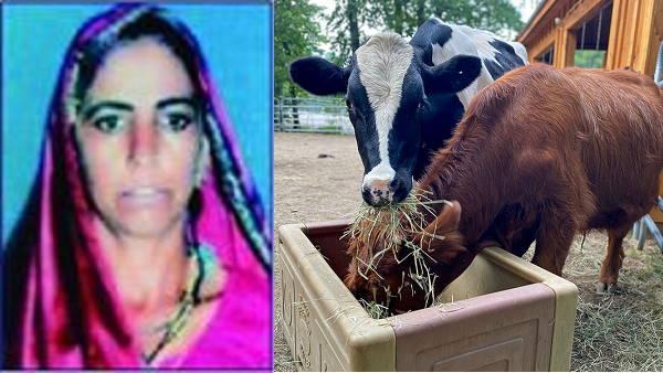 दूध बेचकर गुजरात में ये महिला कमा रही साल में 1 करोड़ रु. से ज्यादा, डेयरी वाले भी रह गए भौंचक्के