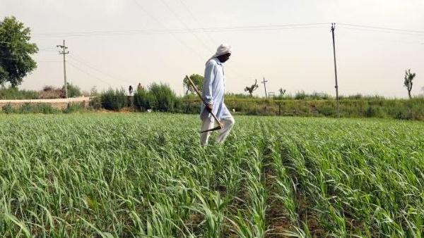 योगी सरकार में MSP पर धान और गेंहू की हुई रिकॉर्ड खरीद, 60 हजार करोड़ रुपए से ज्यादा का किया भुगतान