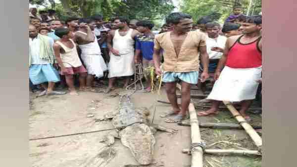 गांव में घुसा मगरमच्छ तो ग्रामीणों ने पकड़ा, फिर वन विभाग से छोड़ने के एवज में मांगे 50 हजार