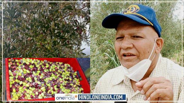 Jaitun ki kheti in Rajasthan :एयरफोर्स से रिटायर होने के बाद इस 'खास खेती' से 15 लाख रुपए कमा रहे ओमप्रकाश बिश्नोई