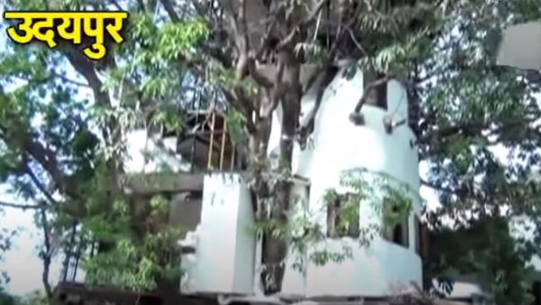 उदयपुर के इंजीनियर ने 87 साल पुराने पेड़ पर बनाया 4 मंजिला घर, टहनियां बनीं डाइनिंग टेबल-टीवी स्टैंड
